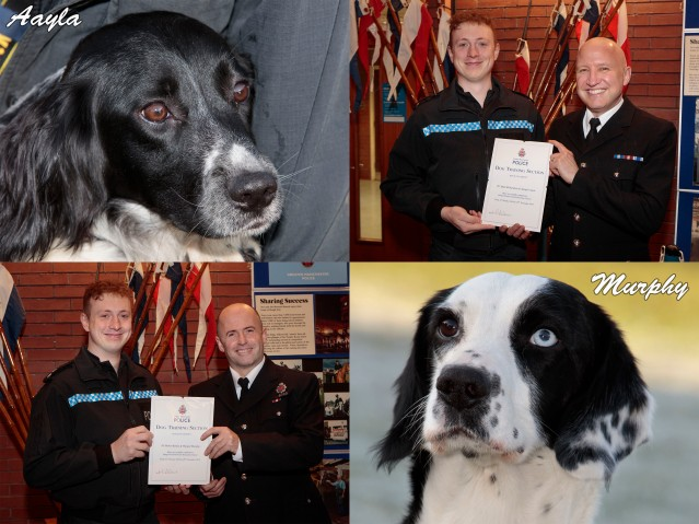 Dog Course Awards montage 2